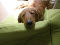 犬との楽しい生活で必要な、本当の犬の知識をお伝えします。