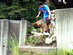災害救助犬育成活動